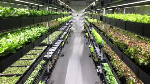 Why Vertical Farms Are Able to Avoid the Current Romaine Debacle