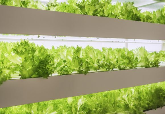 A Case for Vertical Farms