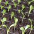 FIRST LIGHT PROJECT FARM UPDATE  FROM PHILABUNDANCE'S NORTH PHILLY WAREHOUSE