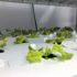 New photos of vertical farms