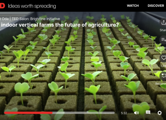 Are indoor vertical farms the future of agriculture?
