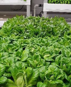 Updates on the Vertical Farm & These Unprecedented Times